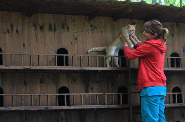 Kedi Kasabası